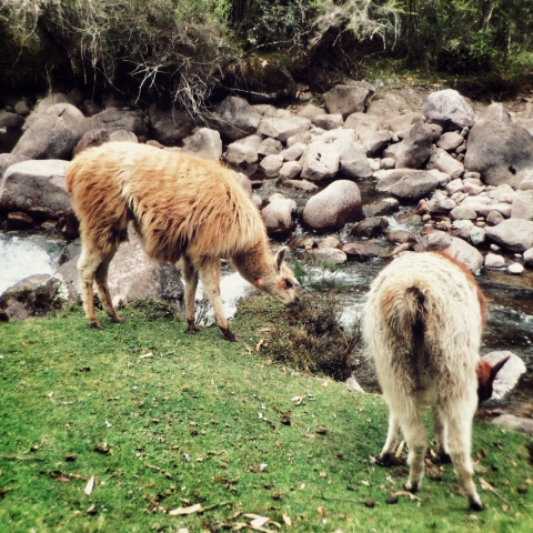 THE LARES TREK (DAY ONE)